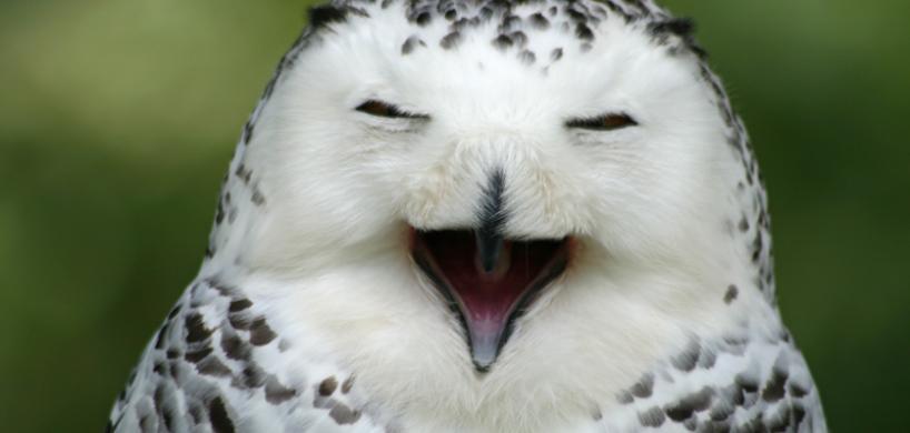 aquashow audierne spectacle oiseau finistere